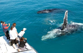 Ultimate Whale Watching Maui