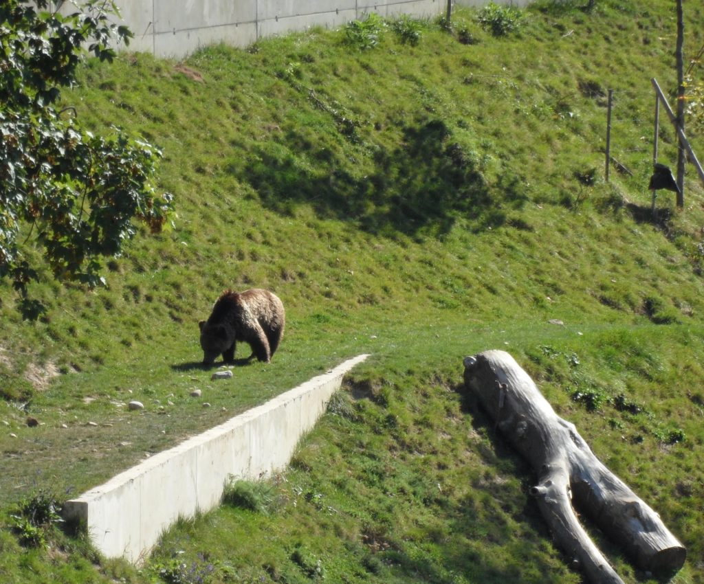 Bear Pits, Bern, Switzerland